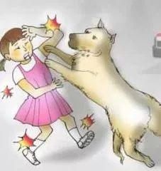 筠连一位环卫工被饭店收养的流浪狗咬伤!究竟该如何处理?
