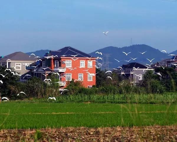 在永川�r村生活的9大好�,住在城里的你�w慕不?