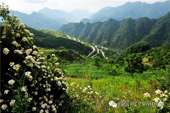 吕敏讷:裕河,夫妻树守候的村庄