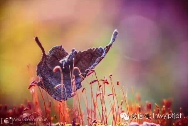 【陇南诗歌】包苞:走过今生(组诗)