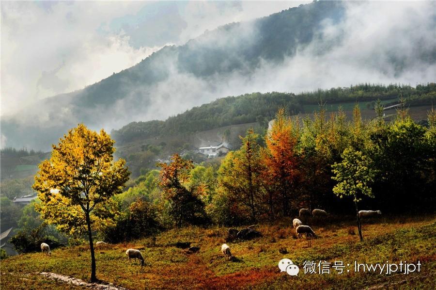 【陇南诗歌】张云:故乡的山脉在飞翔