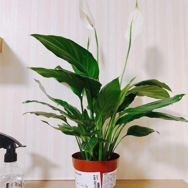 荆门人注意!这20种植物,千万别乱晒太阳!晒一盆死一盆!