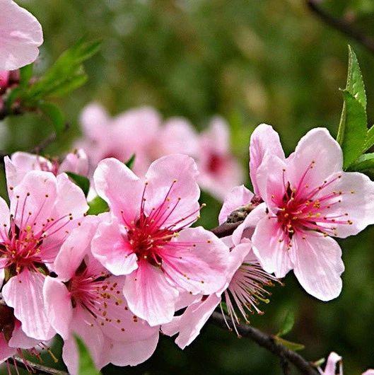 赶快收下这份百花图谱,让广饶的你啥花都能叫上名!