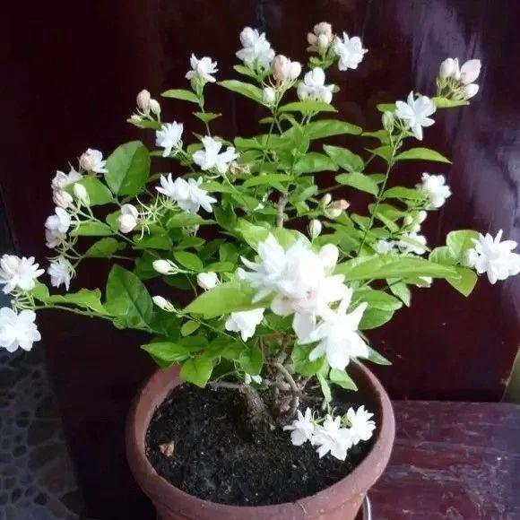 这5种植物放家里,胜过空气净化器