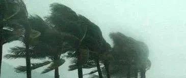 """这个更猛!19号台风""""天鹅""""生成,最强达15级!即将进入南海…"""