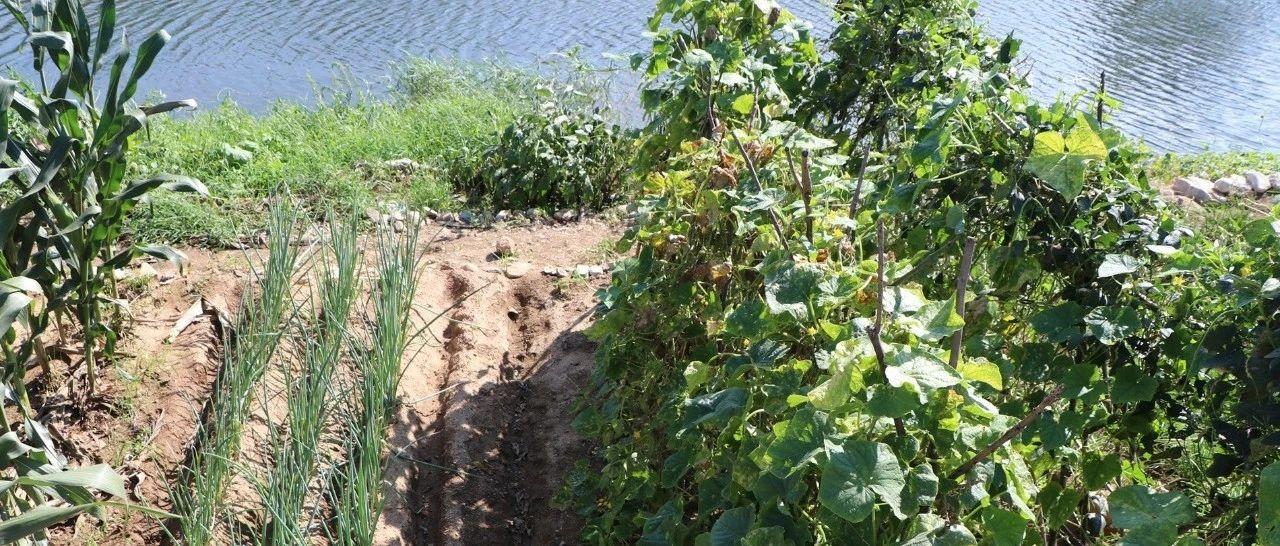 看图:立秋之后,胶东农村的菜园里是个啥样子呢?