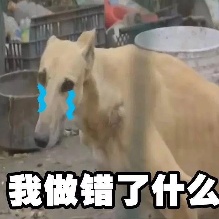 """自家黑狗丢了,他灵机一动偷了朋友家的黄狗,还给它""""�h了个油""""…"""