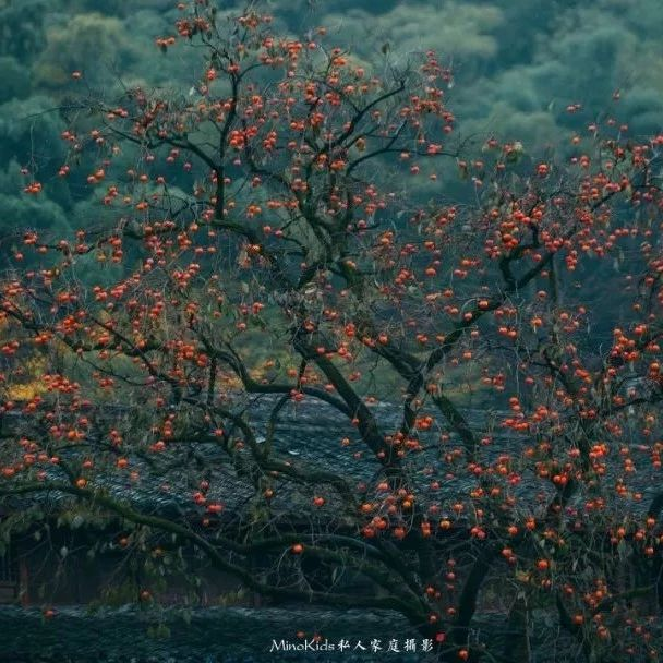 王晓飞:火红的富平