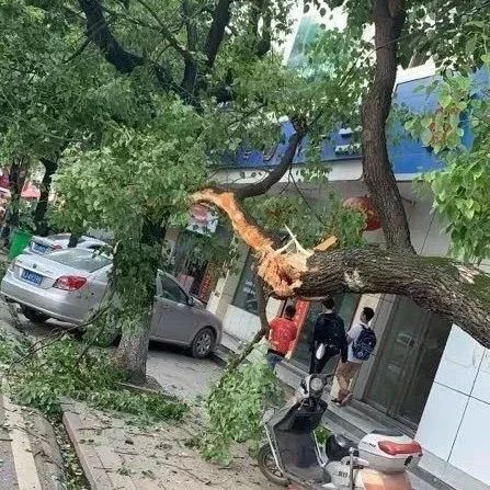 撞树逃跑摊上事了!武穴一司机撞树后逃走被拘15天