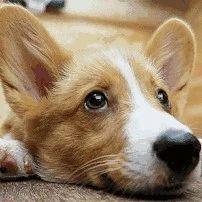 荆门养犬法规出炉:狗可以不懂事,但人必须明事理!