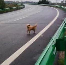 �游�M穿高速公路,是撞�是�?