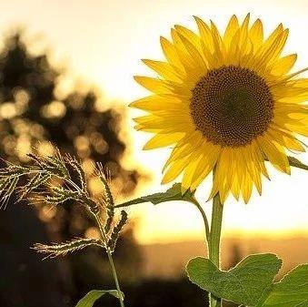 【微健康】春天必做这件事,养阳去百毒!真正的长寿法,从来都是免费的~