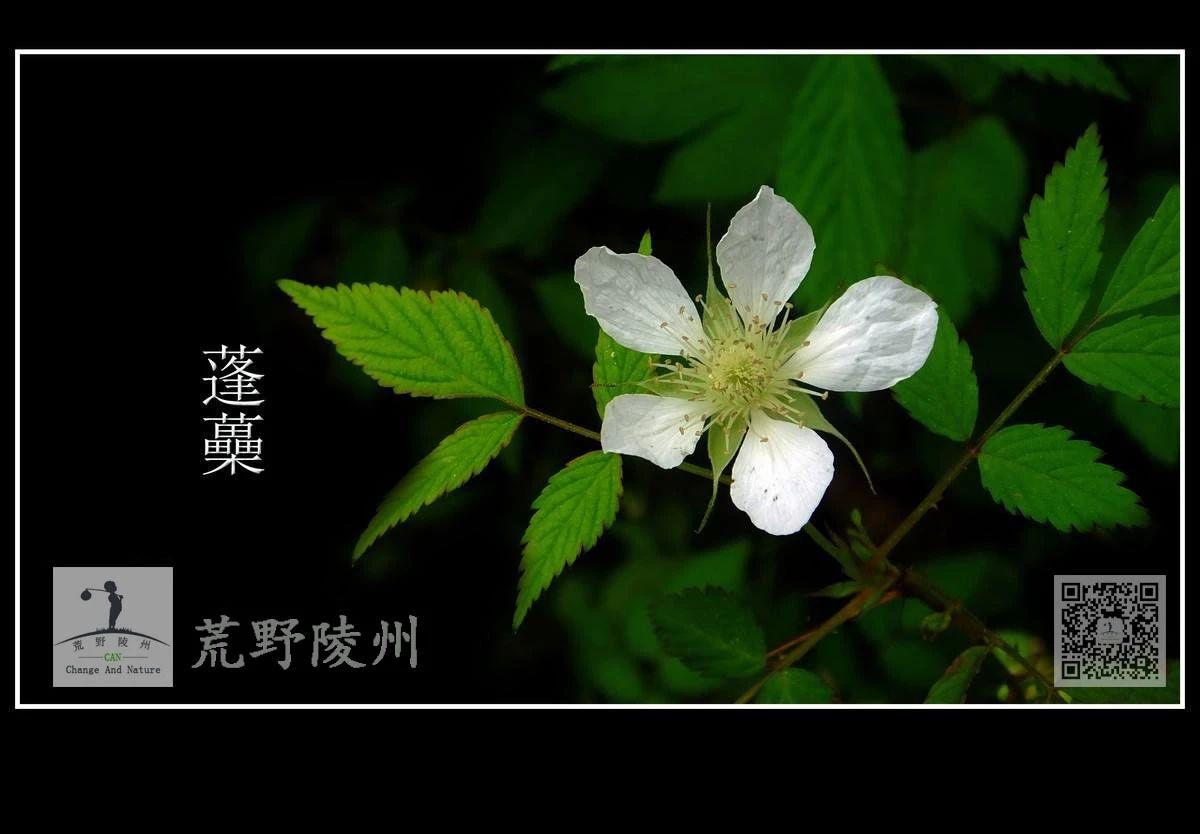 植物知�R分享