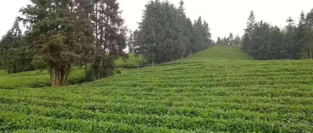 【方志于都】茶�的民�g基本要求