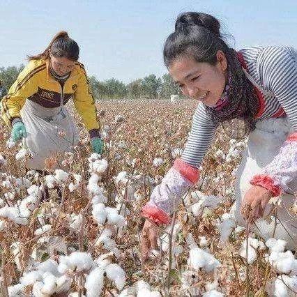 好消息!大足赴新疆摘棉花正在火热报名中......