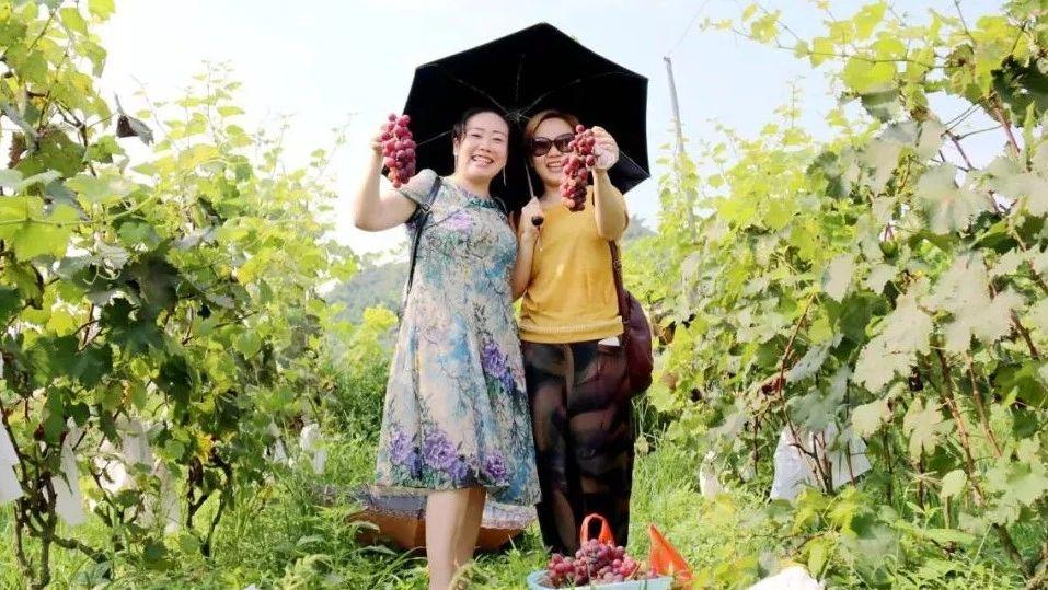大足休闲度假好去处!亲手摘葡萄、酿葡萄酒、享美食,巴适惨了!