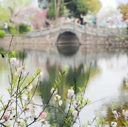一曲《烟花三月》太美了,送给大家春的气息!