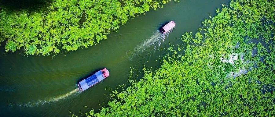 远离喧嚣,拥抱自然!山东这九个绝美湿地莺鹭成群,美到勾魂!