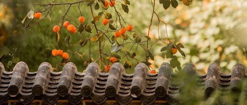 越冷越美!让山东这持续发酵的秋日热情,给你的镜头开开光!