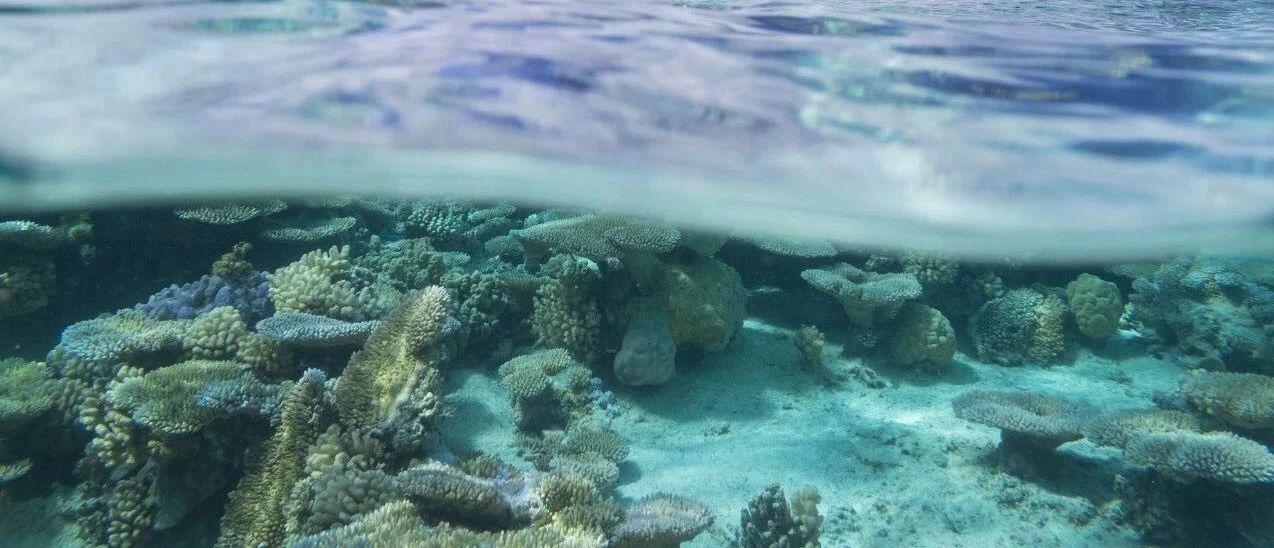 阿拉善SEE�Y助首次中��珊瑚礁�蟾婢�撰�⑻钛a研究空白