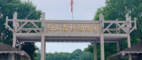 亏损3000万!谁能救救南京红山动物园!