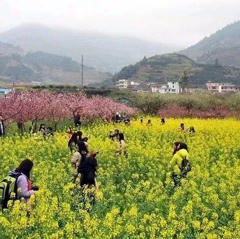 宜宾10多位美女去赏花却被村民拦下,原来是…