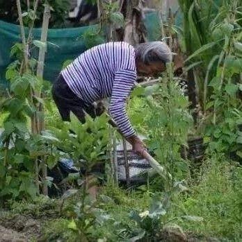 """【城吧】永丰人菜园子里的""""宝藏"""""""