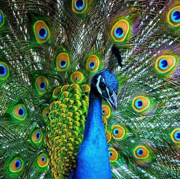 养鸡、鸭、羊、孔雀……合江这小区成了动物园