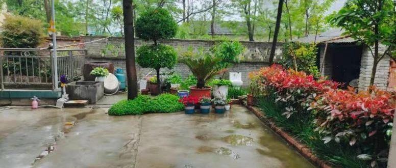 临泉最美庭院,看看有你家么?