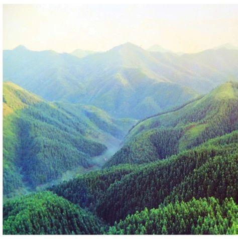 红土地上的绿永丰――全民造林篇