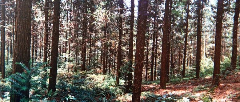 红土地上的绿永丰――项目造林篇