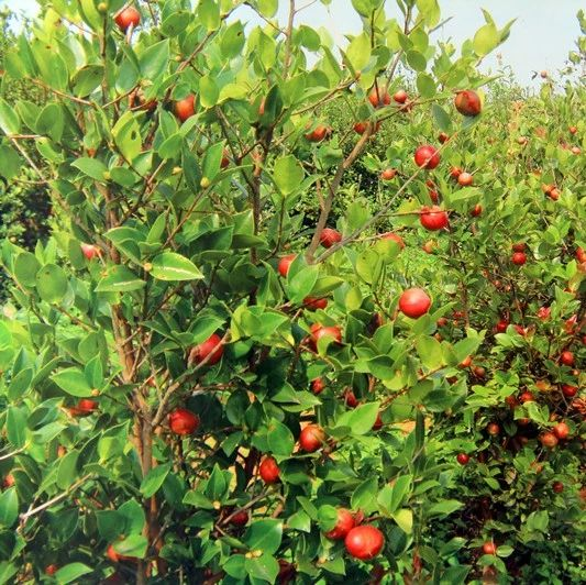 红土地上的绿永丰――造林绿化篇