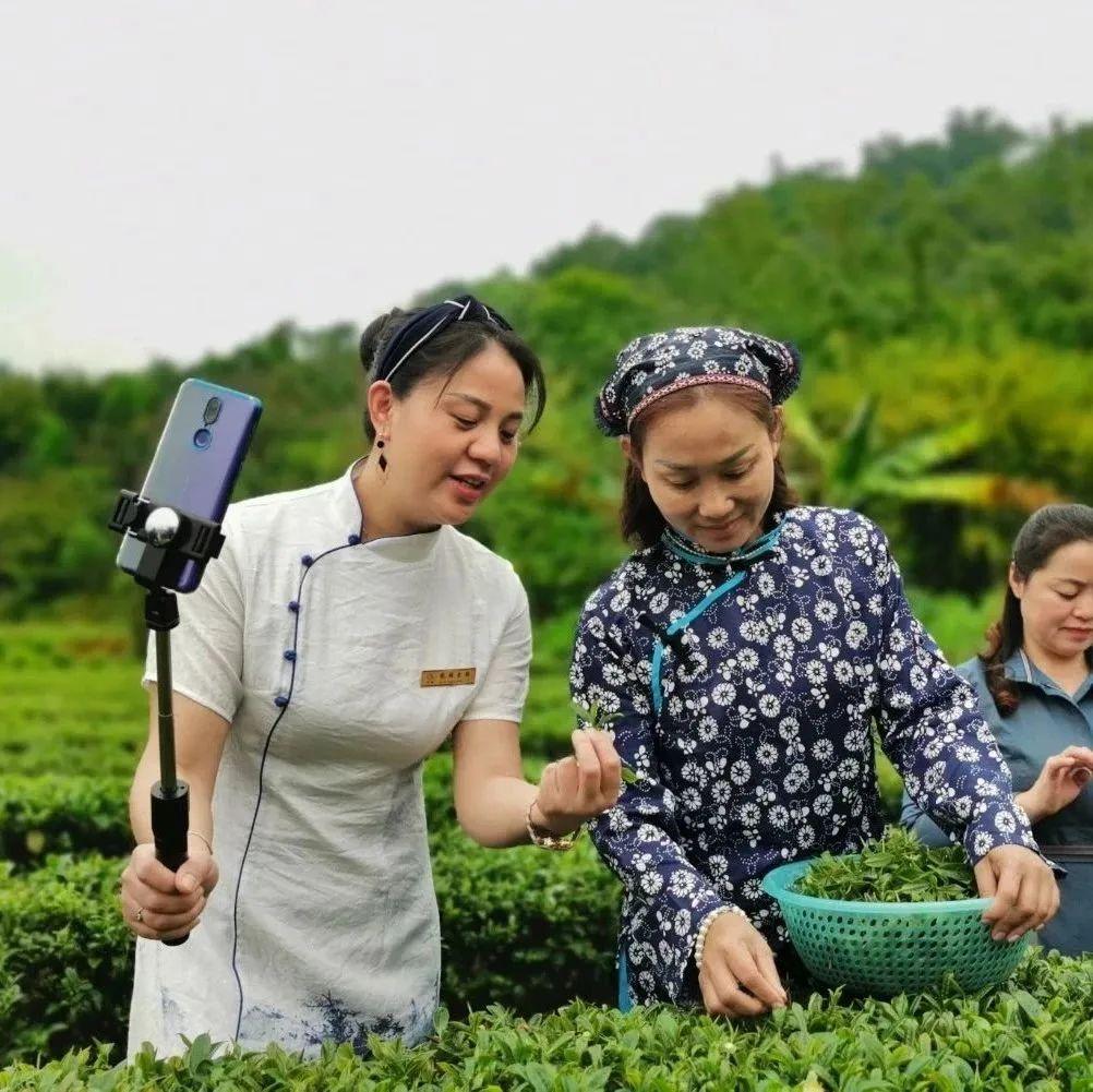 产量+销量!博罗茶农互联网上找出路,破解春茶滞销难题