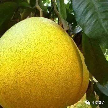 这种水果全身都是宝,止咳、降糖、还能护心脏......望江人现在吃,正当季!
