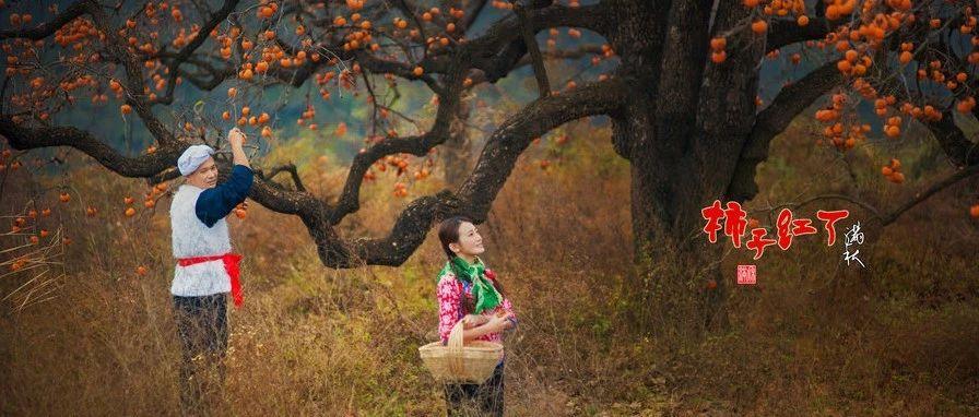 霜降一过,12月开初,似乎一夜之间富平人都成了卖柿饼的