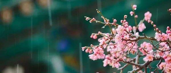 春天给自己一个幸福的理由