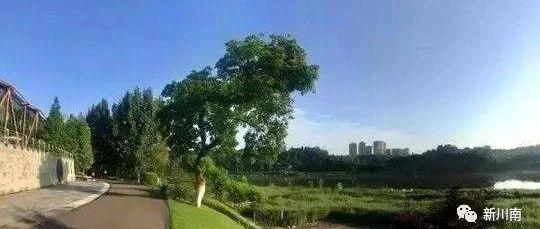 内江市清溪湿地公园拟命名四川省重点公园