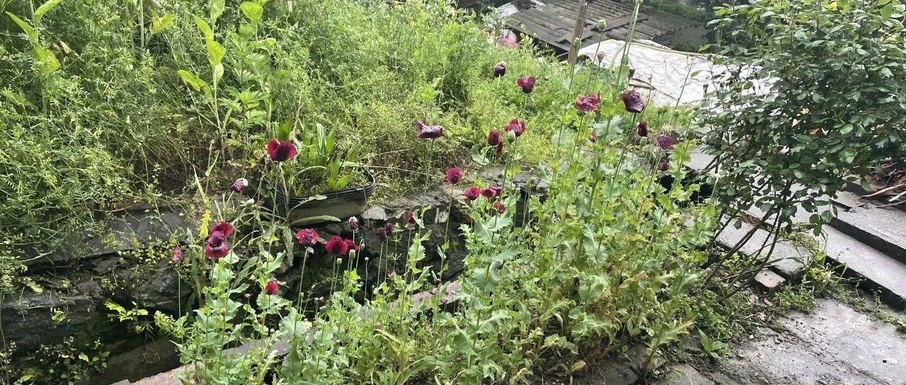 居民家门口的花坛,民警一看吓一跳...谁胆儿这么大?