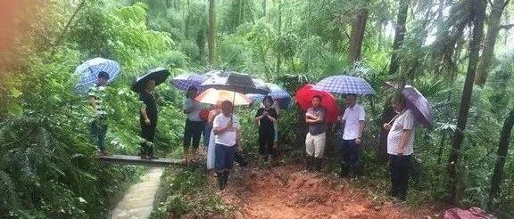 桃江县紧急处置一处渠道坍塌险情!