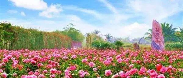 2021青白江姚渡玫瑰园・全新升级玫瑰花海旅游节!4月3日起盛大迎客门票无限量送!