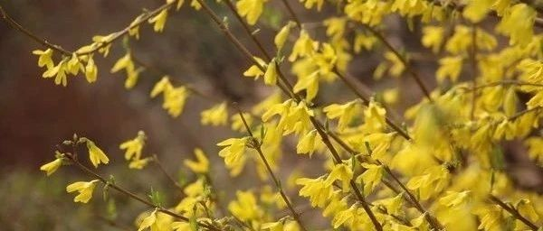 山阳人我们商洛的市树、市花来啦,你知道是啥不?