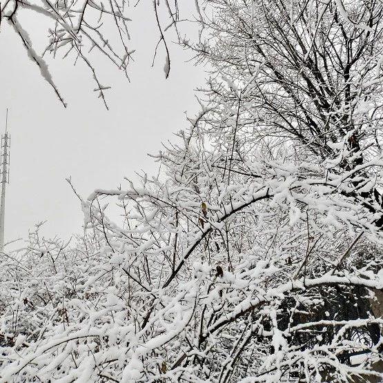 今年第一场雪没看够?别急,第二场雪已经有眉目了→