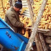 60多户村民卖粮被骗,农民坐家卖粮也要当心…