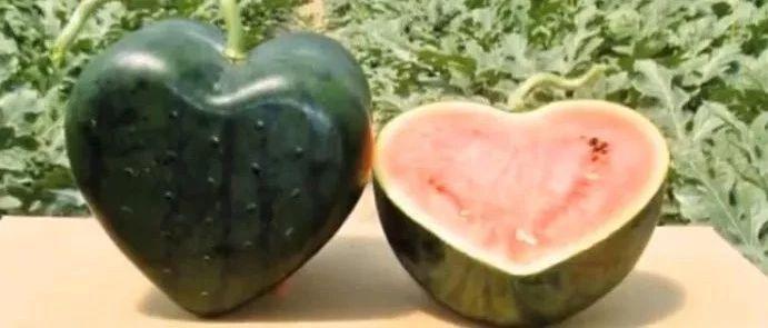 全世界70%的西瓜都被中��人吃了,意不意外?
