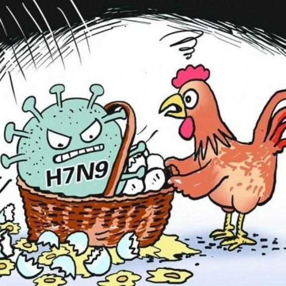 感冒、流感、禽流感,是不是有点傻傻分不清?