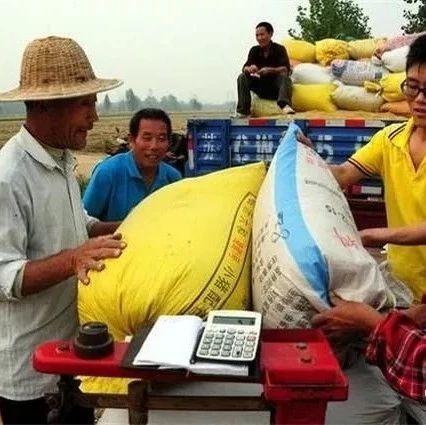 警惕!快看看不法粮贩的这些花招!有农户一次被骗200多万血汗钱!