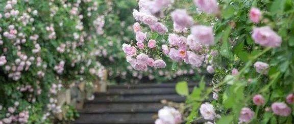 朗诵:心中有暖意,人生有花香