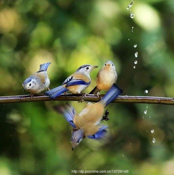经典音乐:最美的秋日鸟语,耳朵听醉了