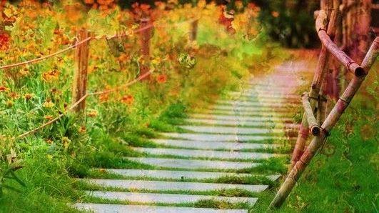 朗诵:人间最美,是清秋