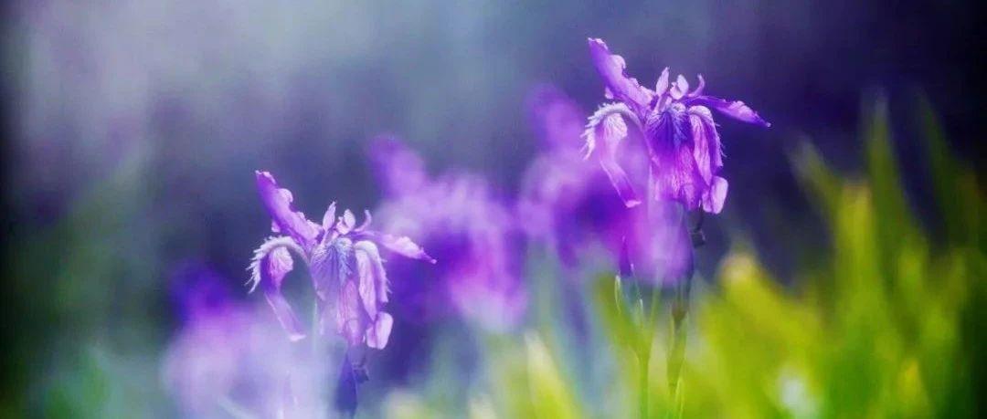 朗诵:四月,最美的风景,都在路上